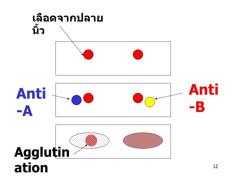 เลือดจากปลายนิ้ว Anti-A Anti-B Agglutination