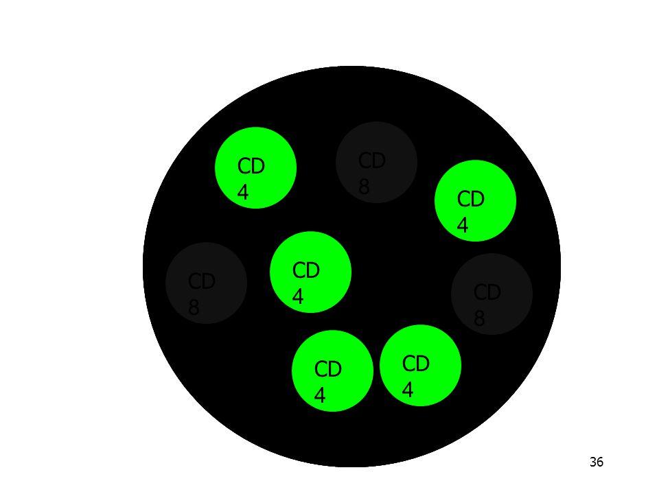 CD4 CD8 CD4 CD8 CD4 CD8 CD4 CD8