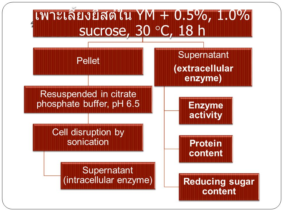 (extracellular enzyme) Reducing sugar content