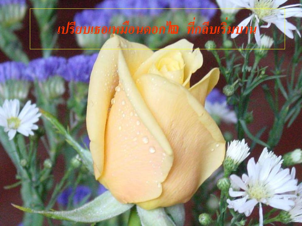 เปรียบเธอเหมือนดอกไม้ ที่กลีบเริ่มบาน