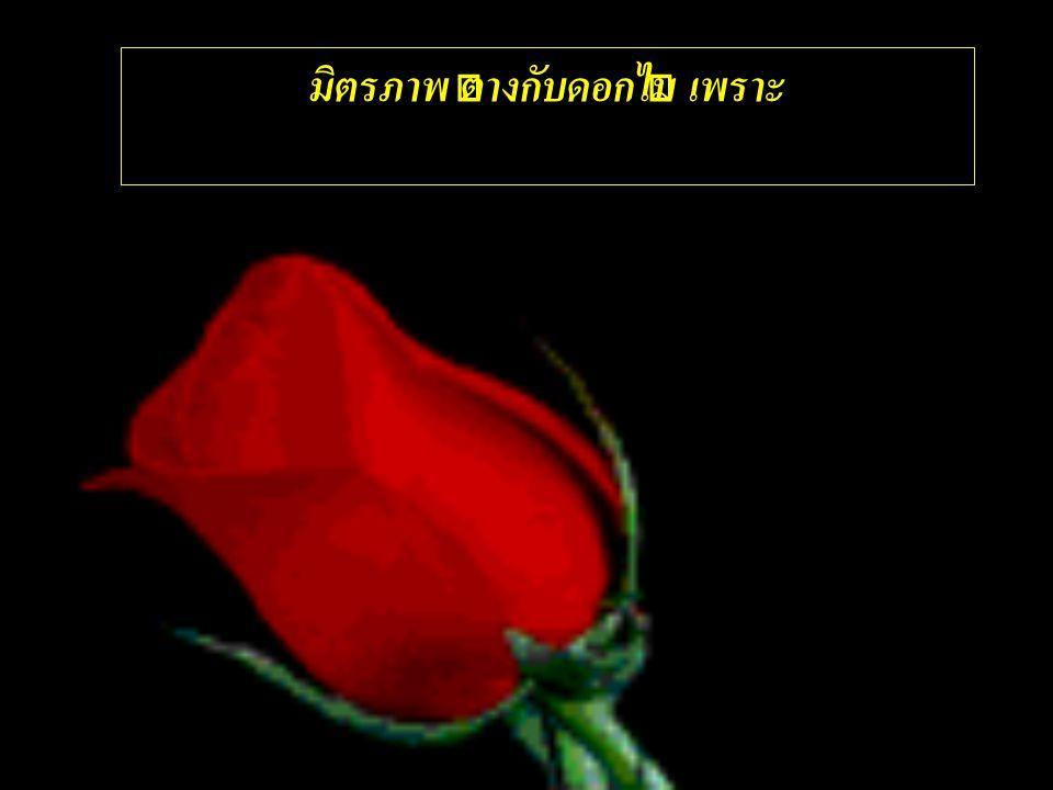 มิตรภาพ ต่างกับดอกไม้ เพราะ