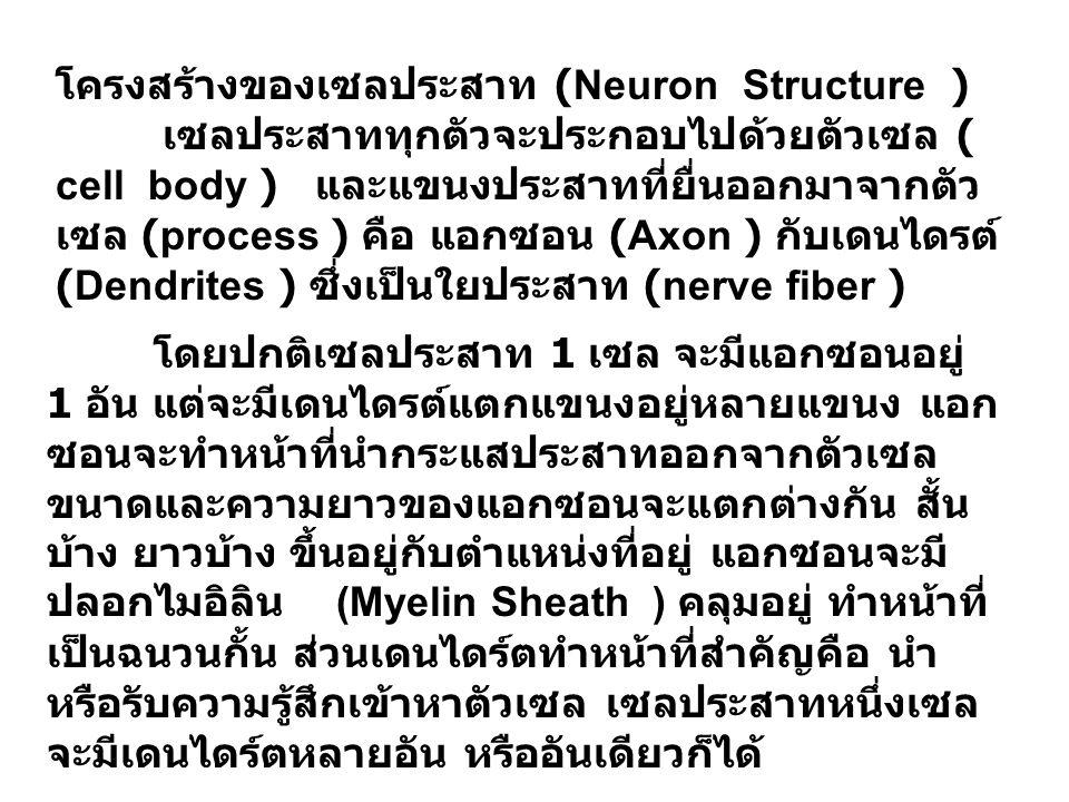 โครงสร้างของเซลประสาท (Neuron Structure )
