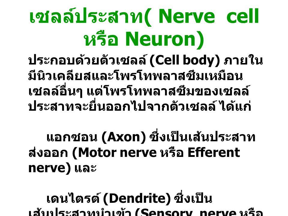 เซลล์ประสาท( Nerve cell หรือ Neuron)