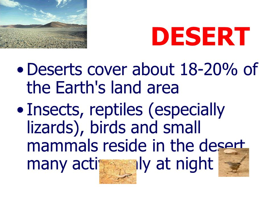 DESERT Deserts cover about 18-20% of the Earth s land area