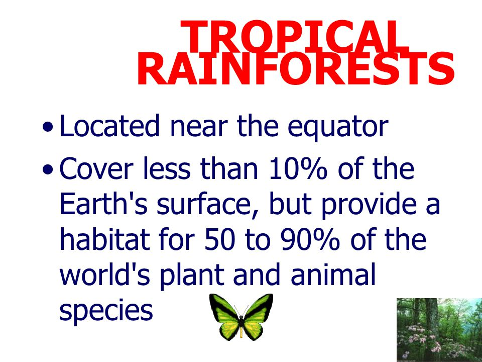 TROPICAL RAINFORESTS Located near the equator