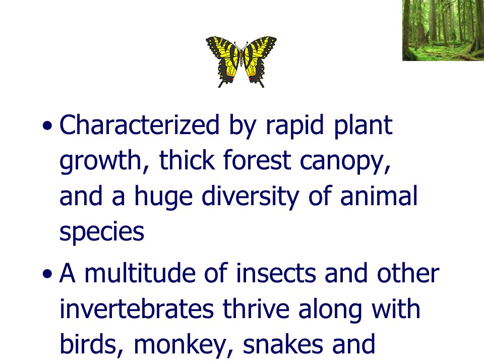 Characterized by rapid plant growth, thick forest canopy, and a huge diversity of animal species