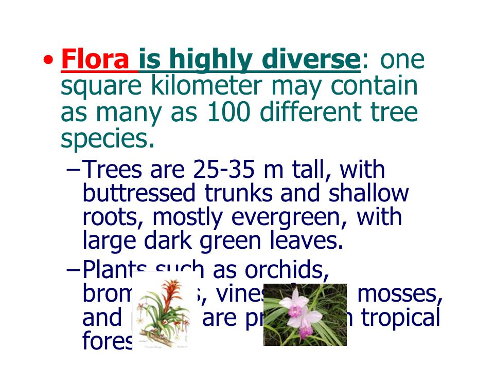 Flora is highly diverse: one square kilometer may contain as many as 100 different tree species.