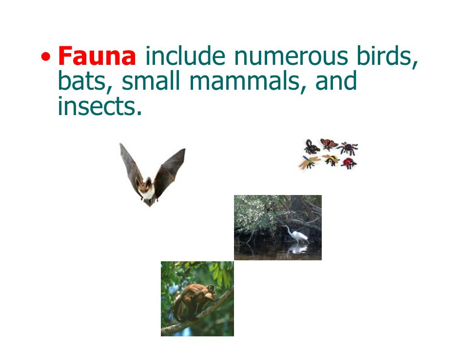 Fauna include numerous birds, bats, small mammals, and insects.