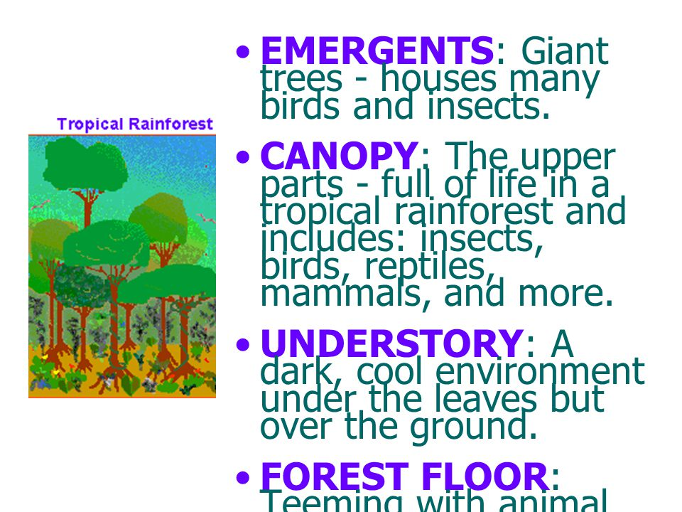 EMERGENTS: Giant trees - houses many birds and insects.