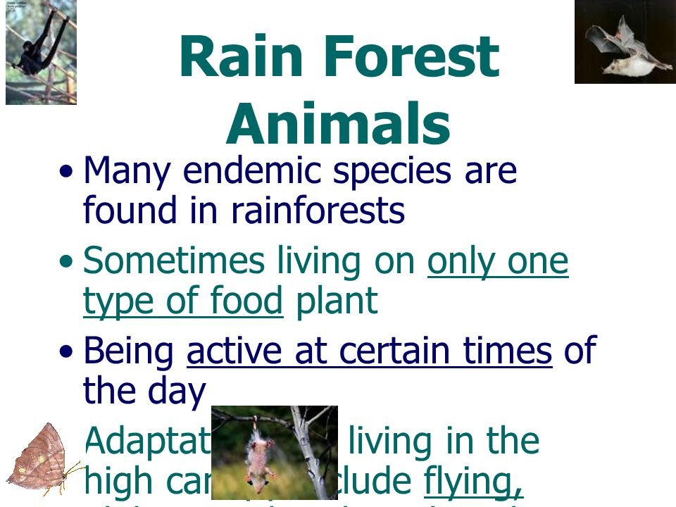 Rain Forest Animals Many endemic species are found in rainforests