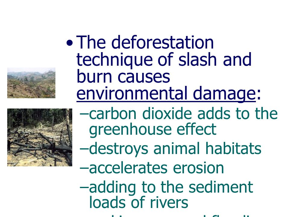 The deforestation technique of slash and burn causes environmental damage: