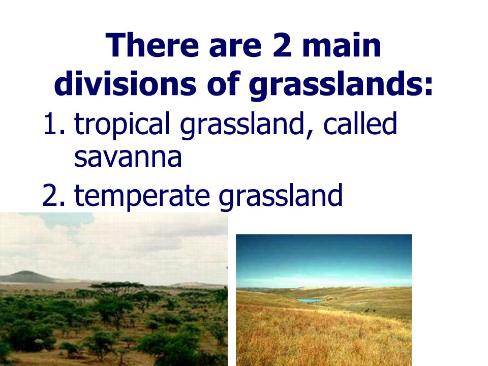 There are 2 main divisions of grasslands:
