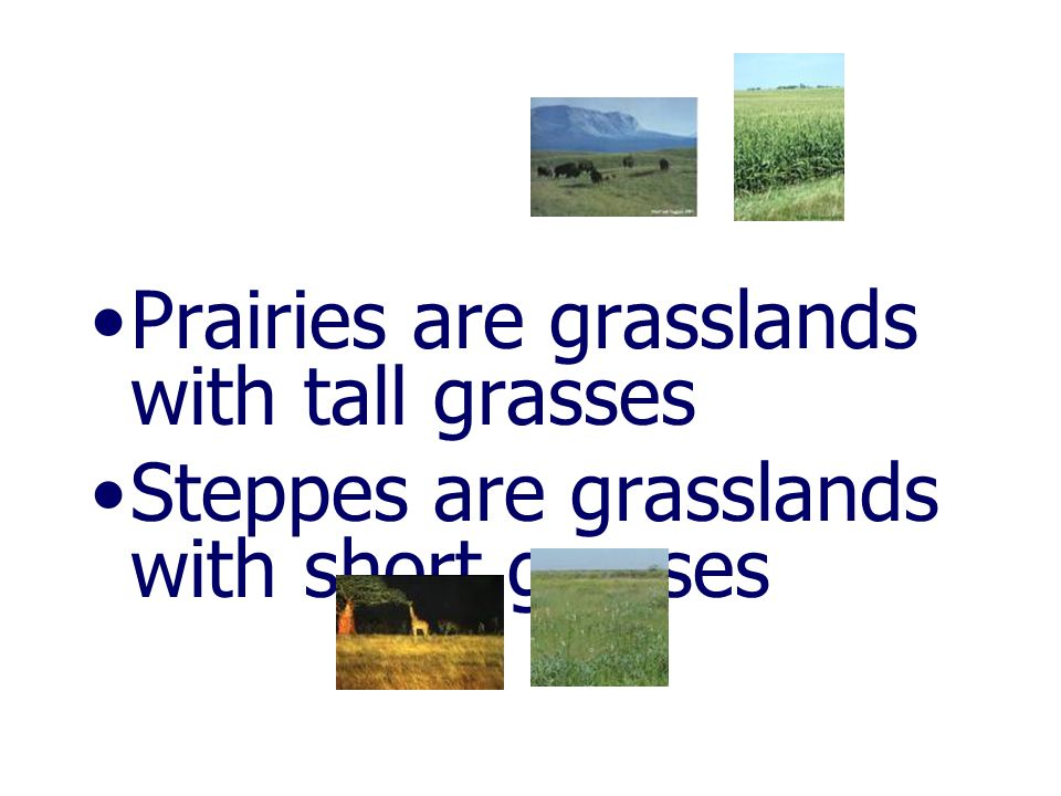 Prairies are grasslands with tall grasses