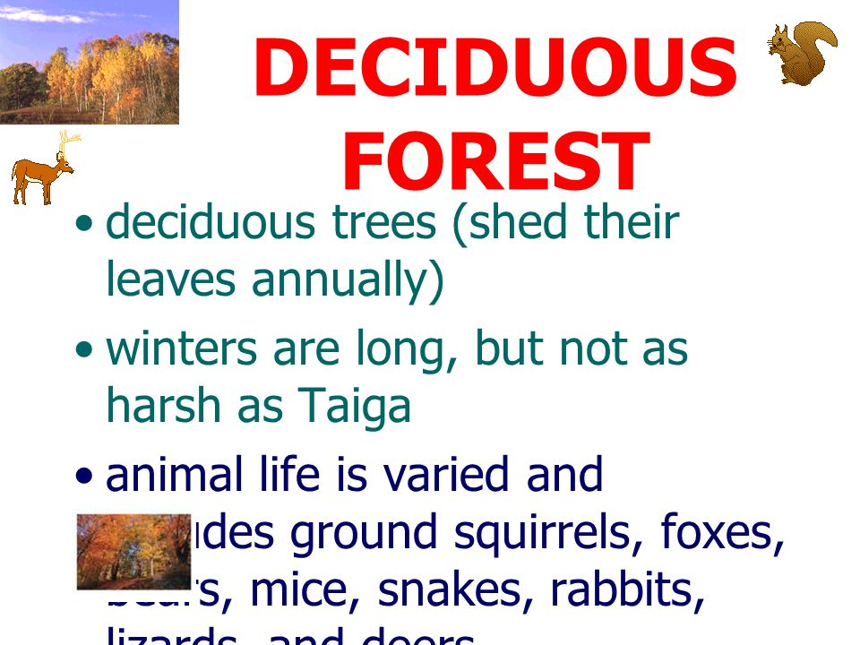 DECIDUOUS FOREST deciduous trees (shed their leaves annually)