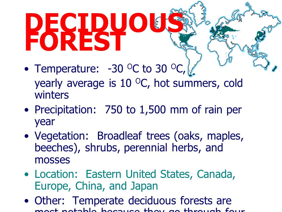 DECIDUOUS FOREST Temperature: -30 OC to 30 OC,