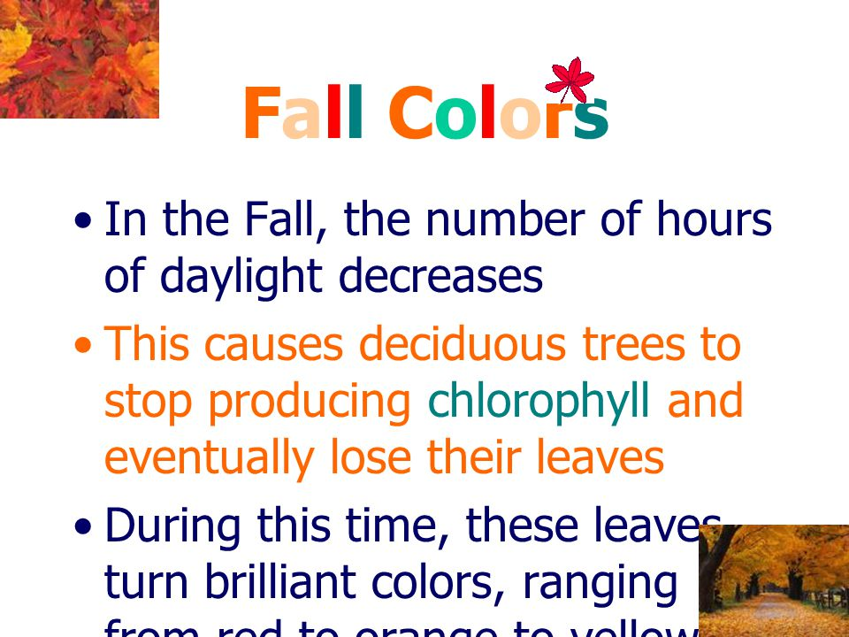 Fall Colors In the Fall, the number of hours of daylight decreases