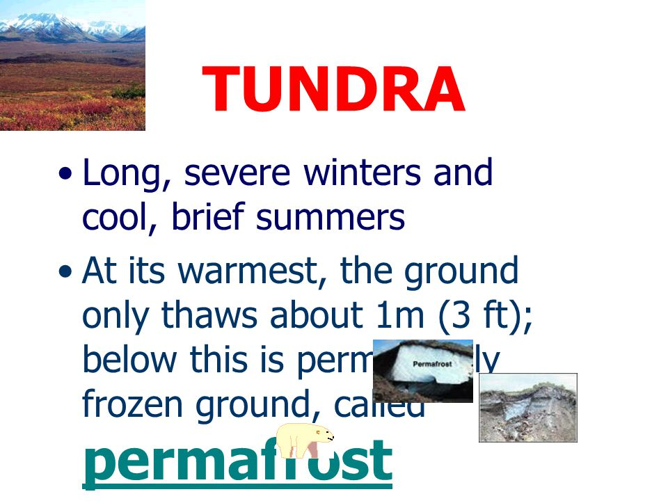 TUNDRA Long, severe winters and cool, brief summers