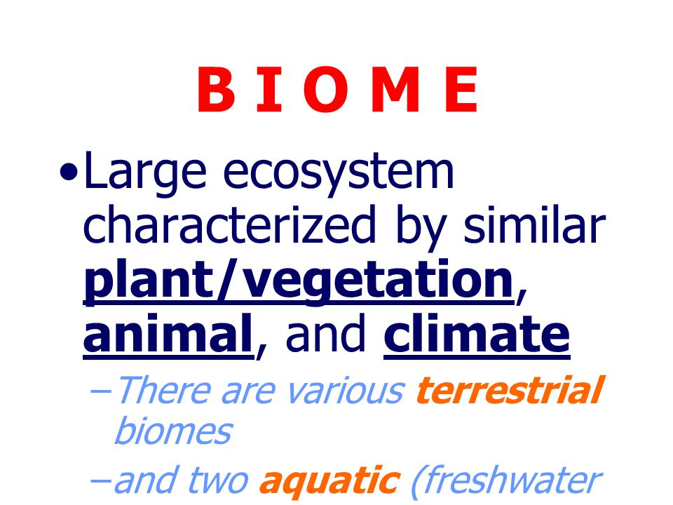 B I O M E Large ecosystem characterized by similar plant/vegetation, animal, and climate. There are various terrestrial biomes.