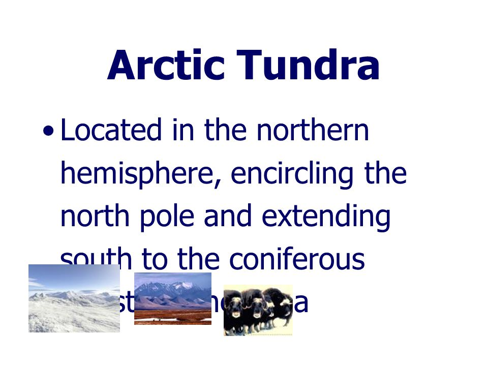 Arctic Tundra Located in the northern hemisphere, encircling the north pole and extending south to the coniferous forests of the taiga.