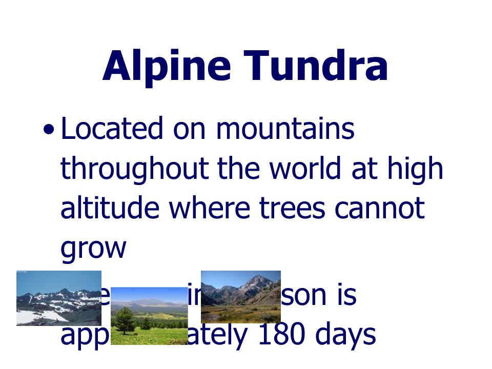 Alpine Tundra Located on mountains throughout the world at high altitude where trees cannot grow.