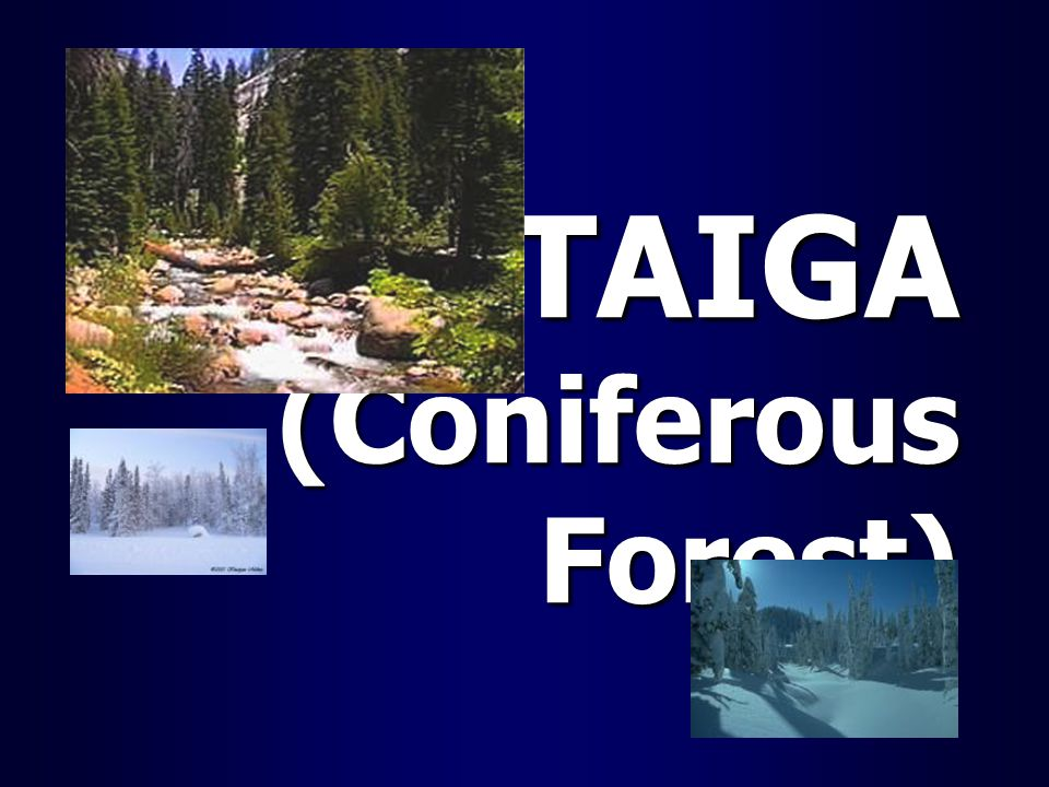 TAIGA (Coniferous Forest)
