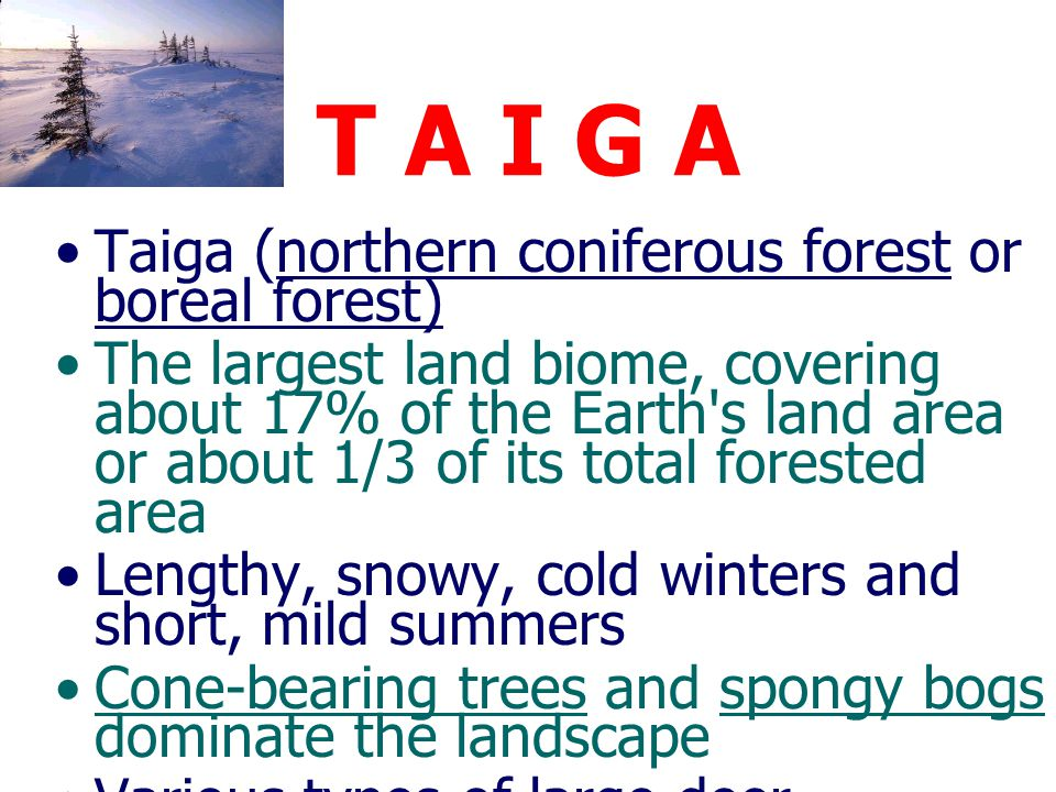 T A I G A Taiga (northern coniferous forest or boreal forest)
