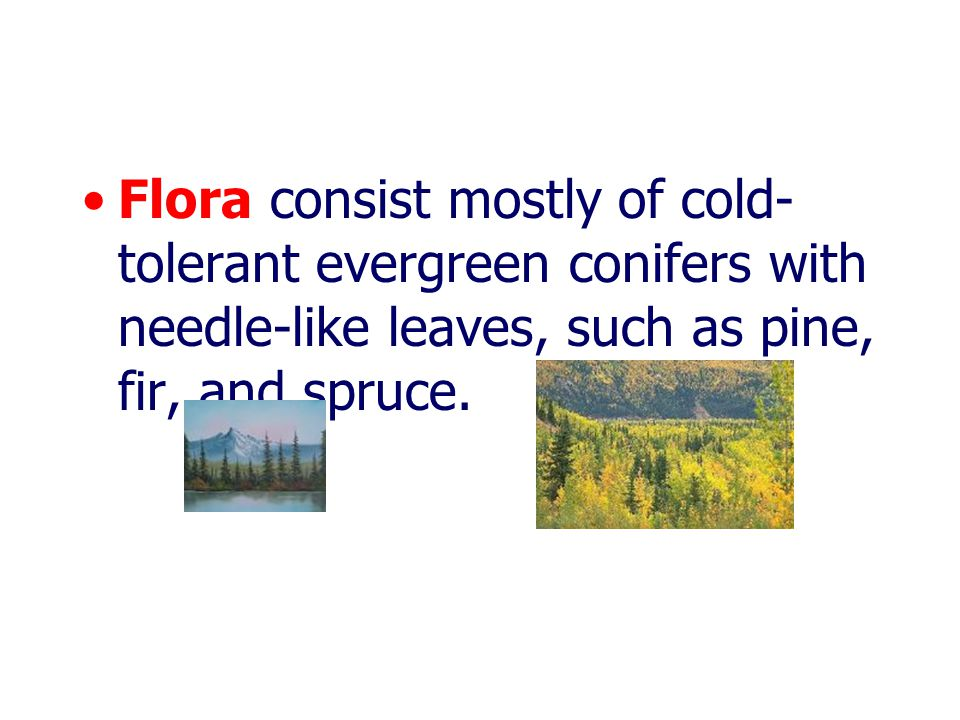 Flora consist mostly of cold-tolerant evergreen conifers with needle-like leaves, such as pine, fir, and spruce.