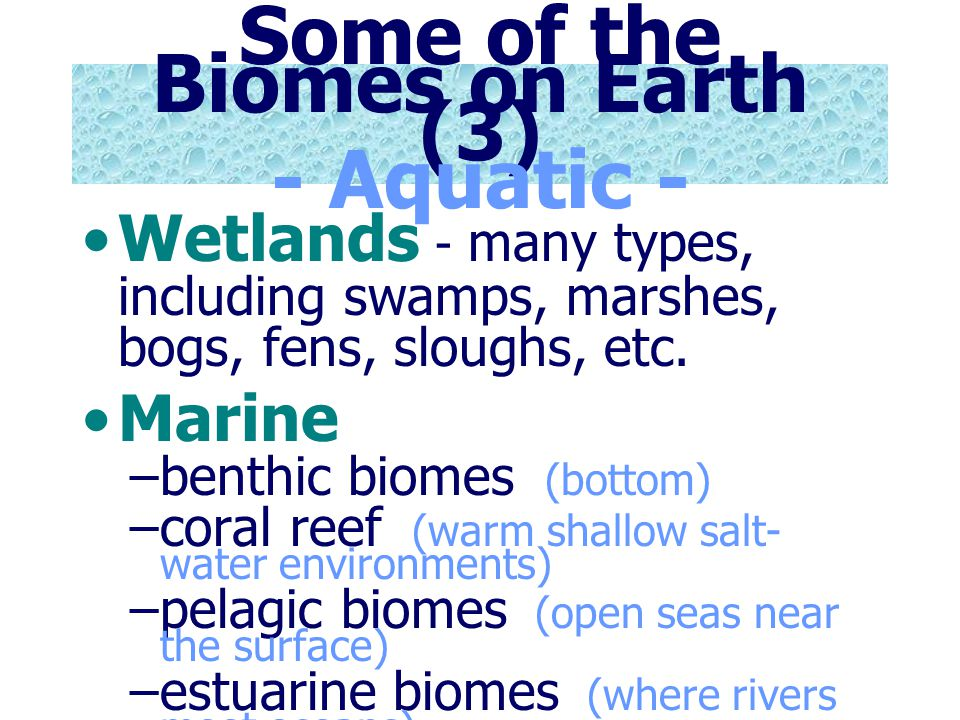Some of the Biomes on Earth (3) - Aquatic -