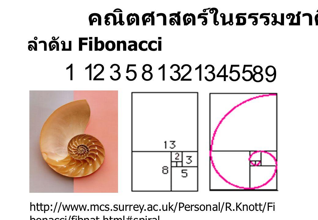 1 1 2 3 5 8 13 21 34 55 89 คณิตศาสตร์ในธรรมชาติ ลำดับ Fibonacci