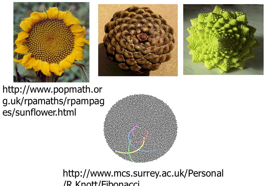 http://www.popmath.org.uk/rpamaths/rpampages/sunflower.html http://www.mcs.surrey.ac.uk/Personal/R.Knott/Fibonacci.