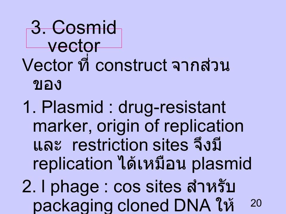 3. Cosmid vector Vector ที่ construct จากส่วนของ