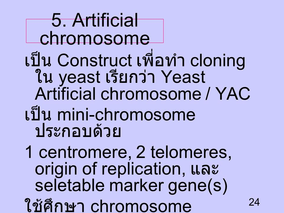 5. Artificial chromosome