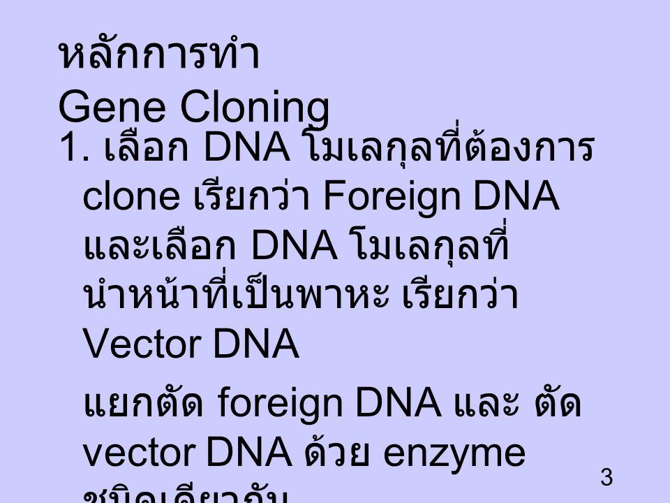 หลักการทำ Gene Cloning
