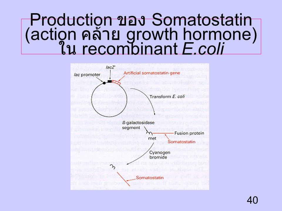 Production ของ Somatostatin (action คล้าย growth hormone) ใน recombinant E.coli