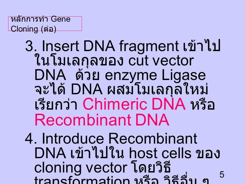 หลักการทำ Gene Cloning (ต่อ)