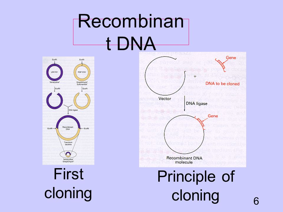 Recombinant DNA First cloning Principle of cloning