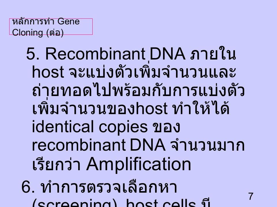 6. ทำการตรวจเลือกหา (screening) host cells มี recombinant DNA