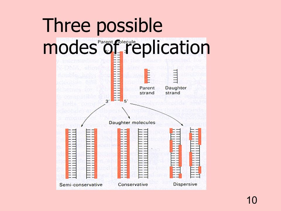 Three possible modes of replication