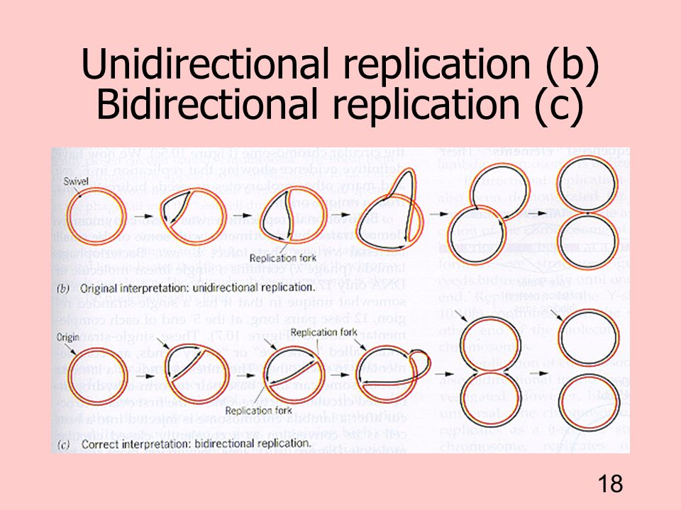 Unidirectional replication (b) Bidirectional replication (c)