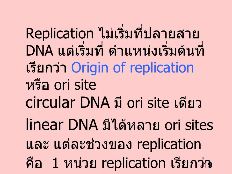 circular DNA มี ori site เดียว