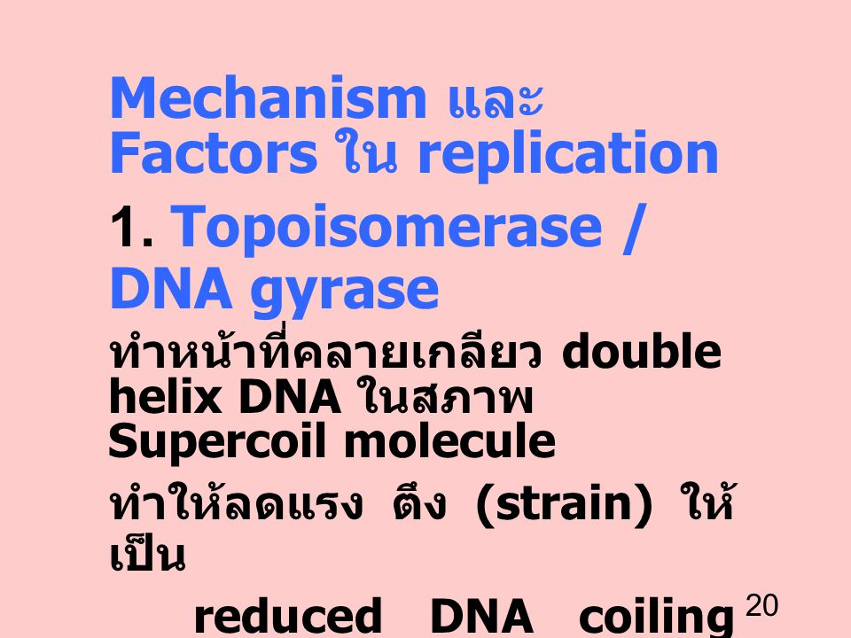 Mechanism และ Factors ใน replication 1. Topoisomerase / DNA gyrase