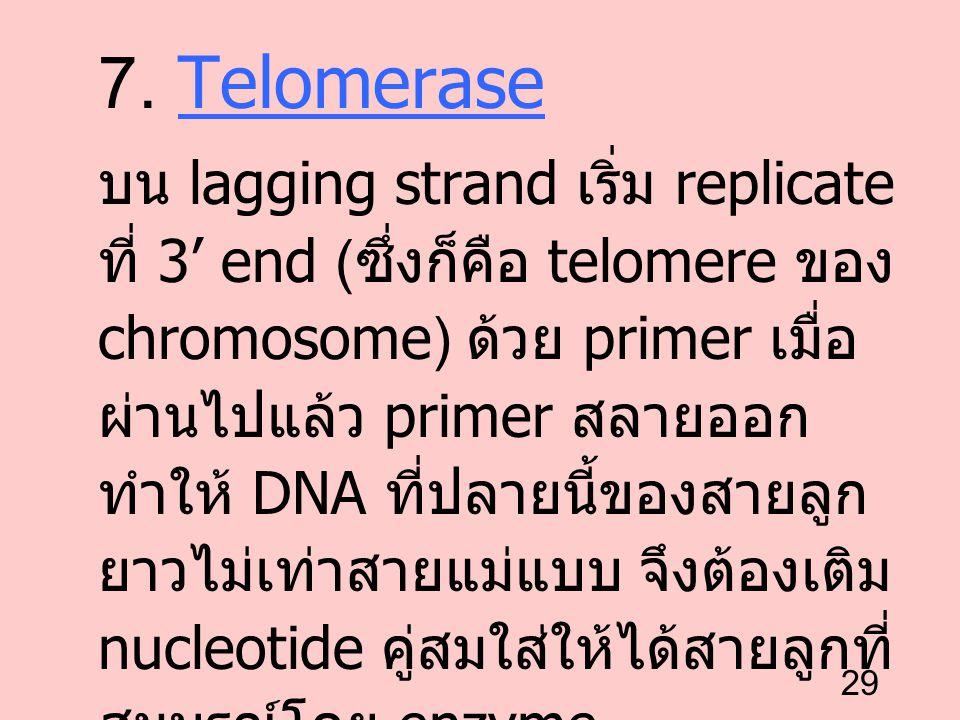 7. Telomerase