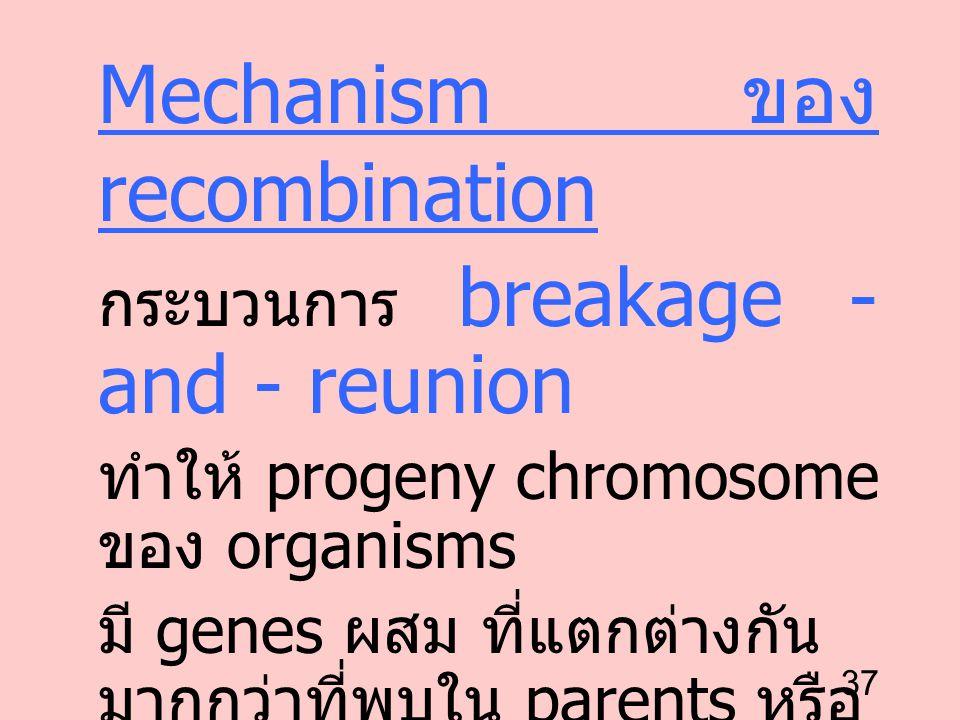 Mechanism ของ recombination