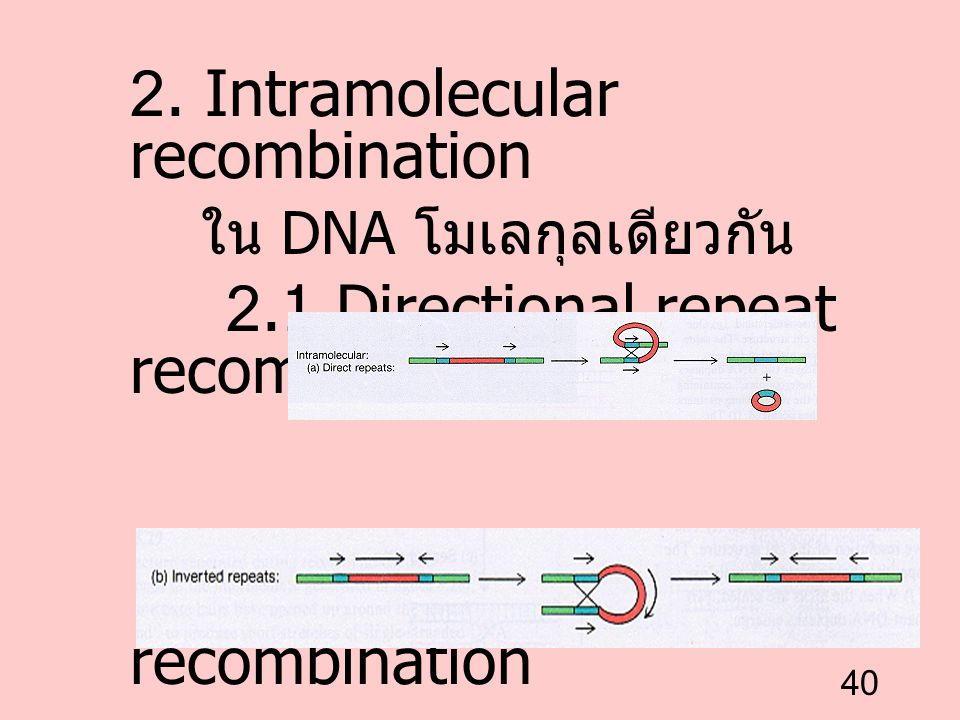 2. Intramolecular recombination