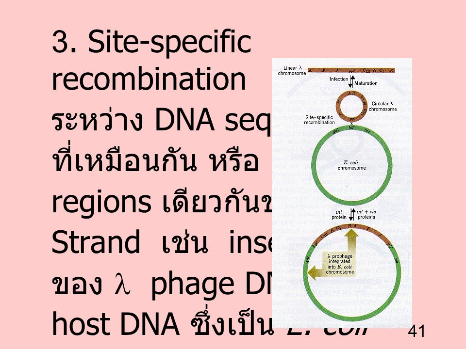 3. Site-specific recombination