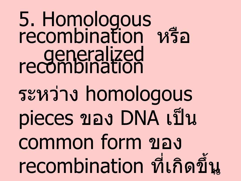 5. Homologous recombination หรือ