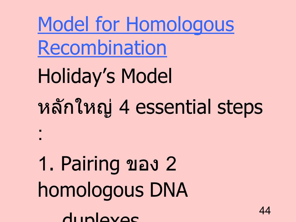 Model for Homologous Recombination