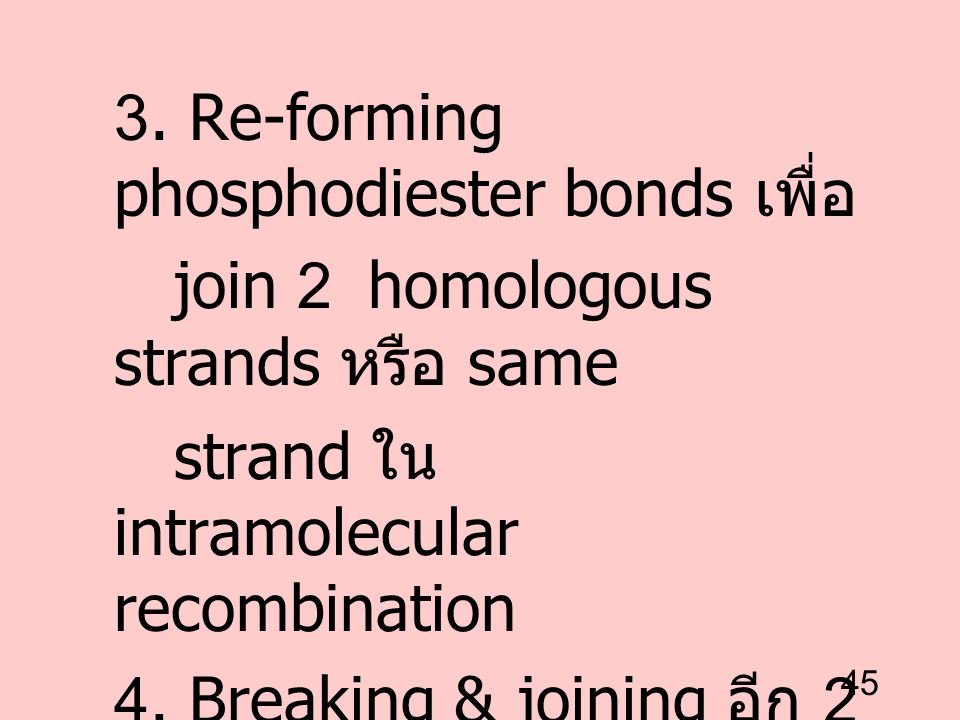 3. Re-forming phosphodiester bonds เพื่อ