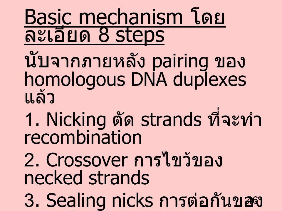 Basic mechanism โดยละเอียด 8 steps