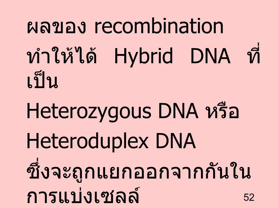 ผลของ recombination ทำให้ได้ Hybrid DNA ที่เป็น. Heterozygous DNA หรือ.